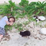 『【乃木坂46】癒し・・・大量の猫と戯れるねこったん・・・』の画像