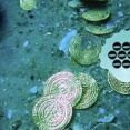 Ocean Treasure Escape