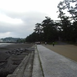 『今和泉島津家屋敷跡の石垣&松林』の画像