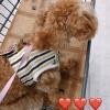 【NGT48】荻野由佳が犬をショッピングセンターのカートに乗せた画像を掲載、波紋を呼ぶが・・・