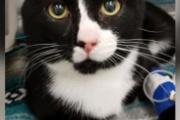 【米国】洗濯機に閉じ込められた猫、45分の洗濯コースを生き延びる