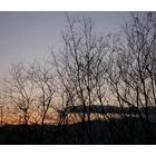 『奈良公園のシカを折り紙で再現!』の画像