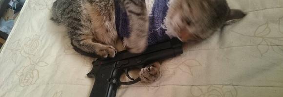 我が家の猫はエアガンが好きみたい
