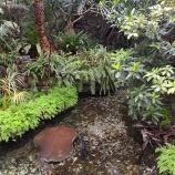 『巨大なエイと出会える板橋区熱帯環境植物館』の画像