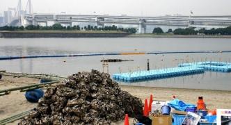 【朗報】東京都さん、お台場の激クサ汚染海水問題を解決する『具体策』を解答