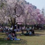 『4月の花④』の画像