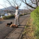 『朝の散歩』の画像