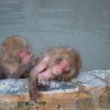 『函館市熱帯植物園のサル特集』の画像