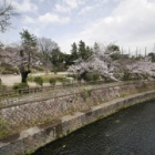 『哲学堂公園 桜最新情報 2020/03/23』の画像