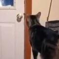 ネコはお父さんが大好きだった。パパおかえり~♪ → 猫はいつもこうなります…
