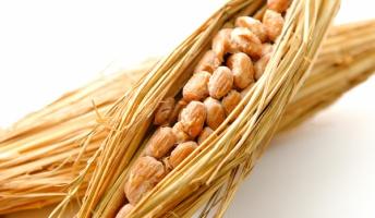 昔の人「うわ…大豆腐って糸引いてんじゃん…」 「まあ肥料にすりゃいんじゃね?」 「食おうぜ」←コイツ