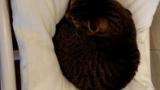猫カフェいったから猫ちゃんの写真貼るね(※画像あり)