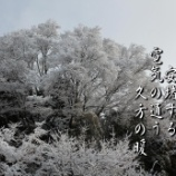 『久方の暖』の画像