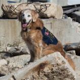 『911で活躍した最後の犬逝く』の画像
