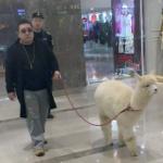 【中国】「北京のデパート、普通にアルパカ散歩してる人おるし…!」話題に [海外]