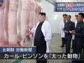 【悲報】テレ東、養豚場を視察する金正恩に太った動物というキャプションを付けてしまう(画像あり)