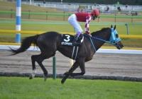 有馬記念に出走するオジュウチョウサンの鞍上が正式に武豊騎手に決定!