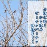 『フォト短歌「ひと休み」』の画像