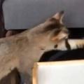 【ネコ】 お姉さんが本を読んでいた。そこに猫がやってくる → こうなった…