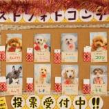『【速報】1月射水店ベストフォトコンテスト1位の発表!&2月エントリー犬発表!』の画像
