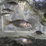 3坪ファームで魚と虫を愛でる