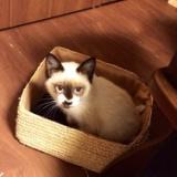 十条仲通り商店街産子猫「ポインテッド」便りのサムネイル