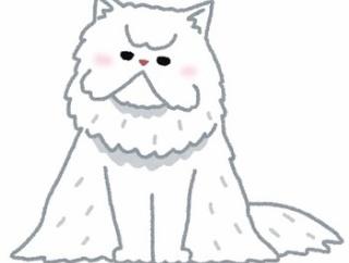 子供の頃3匹猫を飼っていたが、その中の一匹が人間用の洋式トイレを使い始めた時は地味に衝撃だった...。