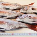 『国東の食環境(269)鯛』の画像
