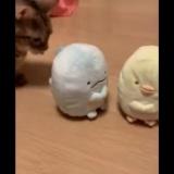 すみっコぐらしと初対面した指原莉乃の猫www