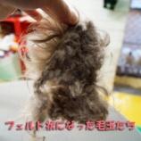 『犬の毛玉を放っておくとどうなる?人ごとでは済まされない毛玉の脅威、ご覧あれ』の画像