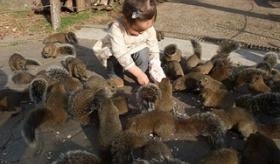 【日本の動物園】   東京に リスだけの 「リス動物園」が ある。 なお カワイすぎるもよう。  海外の反応