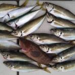 ホシガメ釣り日記