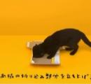 クロネコが箱を組み立てる動画がネットで話題