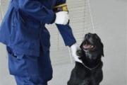 【2度目のお手柄】柱の中に拳銃隠し…組員逮捕 警察犬「イルミナ号」がまた発見/横浜
