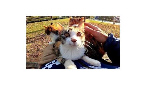 シンプルに野良猫を撮影する日本人の動画に海外からの注目が凄いことに