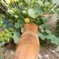 イヌが庭で吠えていた。何に吠えているのかな? → これでした…
