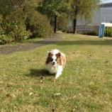 『黒部市の総合公園で広々お散歩☆スタッフ犬アニーがほぼ一人占め!』の画像