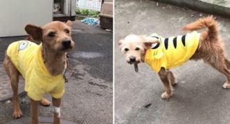 【愛犬家発狂】仁川国際空港で係員のミスで犬が脱出し滑走路に 仕方なく射殺