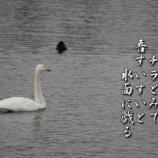 『水面にたわる』の画像