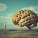 脳科学者 「脳は物質に過ぎないのに、なぜ意識が生まれるのか? 実はよくわかってない。」