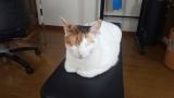 猫を疲れさせて夜大人しくする作戦失敗!!!!!(※画像あり)