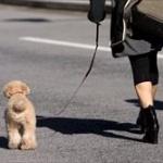 東工大に「犬を遊ばせないでください」の看板 → 愛犬家「日本一感じの悪い大学 東京工業大学」