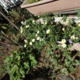『j3月の自宅の花』の画像