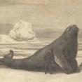 人間ゲスすぎ…最短で絶滅させられたステラーカイギュウが切なすぎる