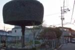 インサイト交野No.51~私部の銘木『モッコモコの木』~