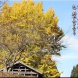 『うつせみの公孫樹』の画像