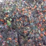 『家庭菜園・秋』の画像