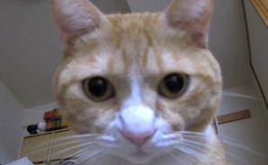 ライブカメラで見たネコの様子は