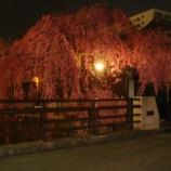 『 石橋屋さんの夜桜』の画像