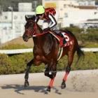 『【姫路・白鷺賞結果】ジンギが年度代表馬の力を見せつけ圧勝!』の画像